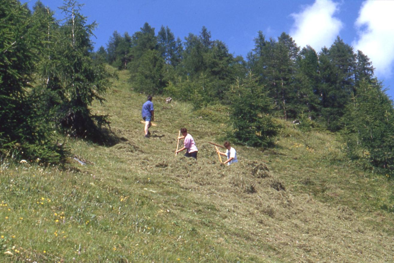 Bergheuernte